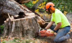 tree removal - stump grinding
